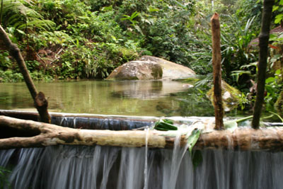 Tropical rain forest - jungle pool