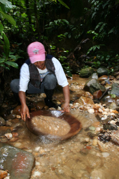 Panning gold in the rain forest