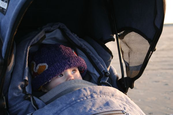 Little wolf in his buggy, tucked in against the cold winter gusts